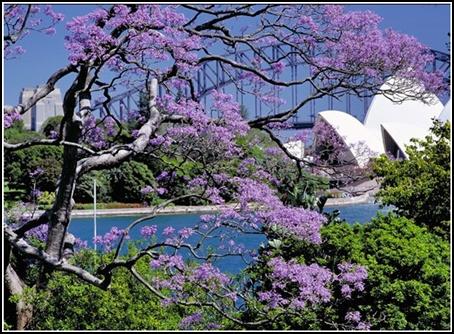 HoaTim-Sydney