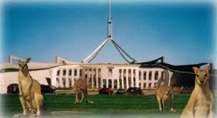 nu-cuoi-kangaroo-3