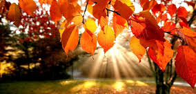 autumn2a