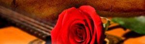 romance-rose2