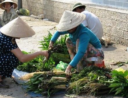 Bai hanh phuong nam 01