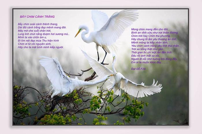 bay chim canh trang 02
